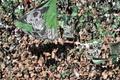 Saint-Étienne é o novo PSG?.AFP