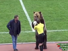 The bear has been trained to hand the ball to the referee. Screenshot