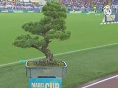 Il vincitore di Roma-Real vincerà... un bonsai!. Captura/RMTV