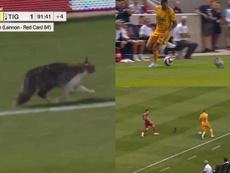 El gato se convirtió en protagonista en el final del encuentro. Twitter/FIFA.com