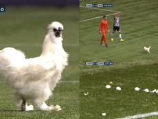 A chicken and eggs stopped play in the Heracles v Heerenveen game. Twitter/FOXSports