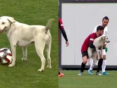 Un perro interrumpió un partido en Turquía. Capturas/Reuters