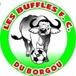 Buffles de Borgou
