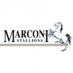 Marconi Stallions