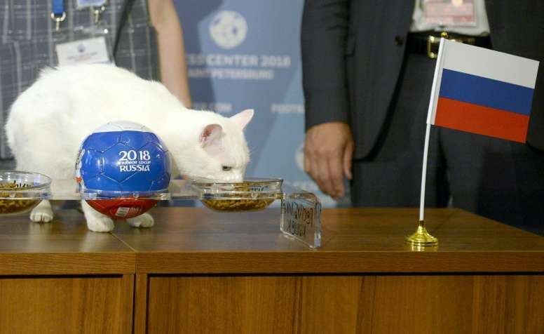 Achilles is hoping to emulate Paul the octopus' success. AFP