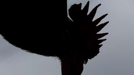 A dead rooster was left outside Grosso's home as a threat. AFP
