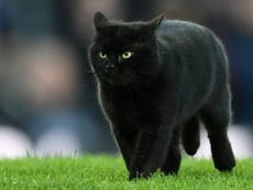 The cat's appearance on the pitch caused a lengthy delay at Goodison Park. AFP
