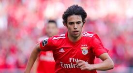 El Benfica cierra la Liga con goleada. EFE