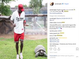 La gara di Pogba con una tartaruga. Instagram/paulpogba