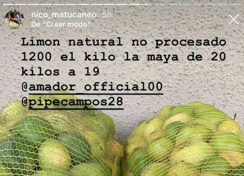 Maturana vende limones y aguacates. Captura/Nico_matucaneo