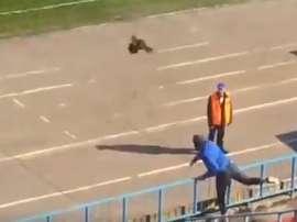 Los gallos en Rusia son un símbolo de la traición. Twitter