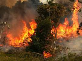 Palmeiras cobra governo por situação da Amazônia. Goal