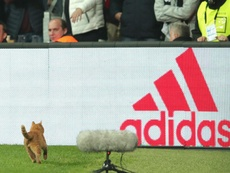 A cat somehow found its way onto the pitch. GOAL