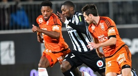 Sylvain Marveaux Karl-Toko Ekambi Angers Lorient Ligue 1 03122016