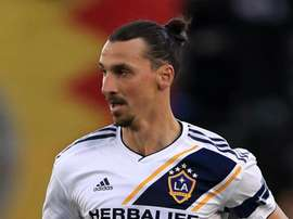 Ibra wants Italy return - Schelotto