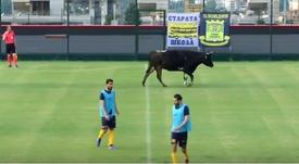 Momento en el que la vaca aparece en escena. Youtube