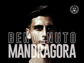 Maandragora à l'Udinese. Twitter/Udinese
