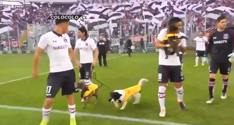 La belle initiative canine de Colo-Colo. Twitter/CaciqueENG