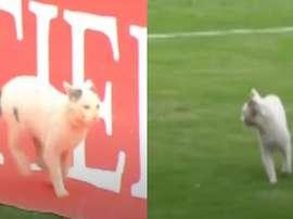 El gato que ayudó a defender a Junior. Capturas/RCN
