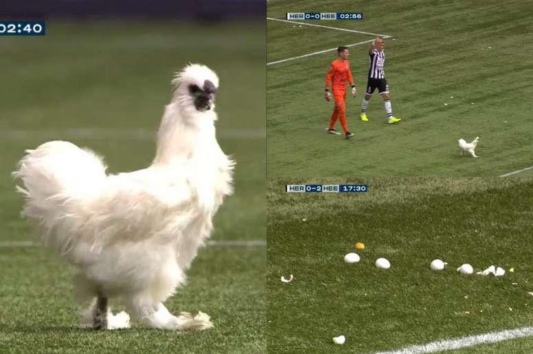 El Heracles-Heerenveen se detuvo por el lanzamiento de huevos... ¡y una gallina!. Twitter/FOXSPORTS