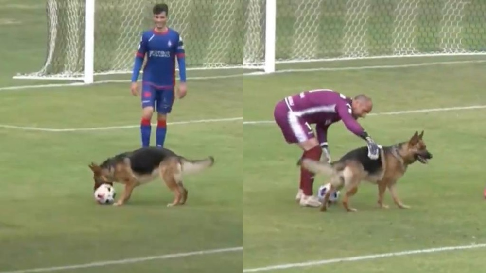 Un perro irrumpió en un partido de Segunda B. Captura/Footters