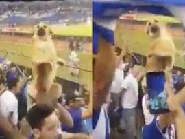 Le chien le plus fan de football du monde. Twitter/FootballJOE