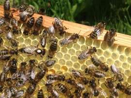 St Pauli make honey in order to help the declining bee population. Twitter
