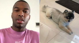 Sturridge got his dog back, but did not pay out the reward he promised. Instagram/danielsturridge