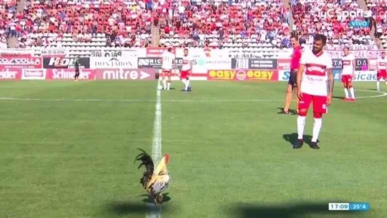 Un gallo saltó al terreno de juego. Captura/TyC Sports