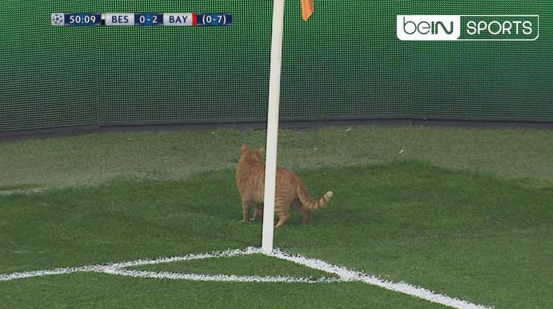 A ginger cat wanted to join in the action. Screenshot