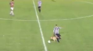 Le chien s'est lancé vers le ballon. Twitter/AtaqueFutbolero