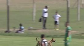 El perro entró por el campo a través de la puerta ubicada tras una portería. Captura/ESPN